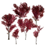 Atx camp floordecor elmtrees redleaves l.webp