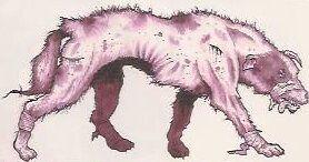 Wild Mutant coyote.jpg