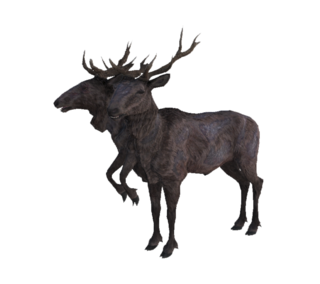 Radstag02.png