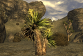 FNV Yucca.png