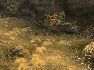 Hidden Cazador Nest.jpg