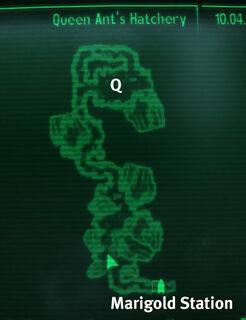 Metro Queen Ant's Hatchery.jpg
