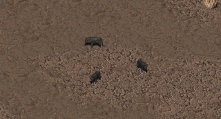 Fo1 Coyote.png