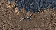 Fo1 Horned Kangaroo.png