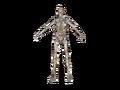 Gen2Skeleton.png