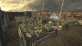 FNV Greenhouse 10.png