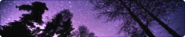 Starry forest night divider by cal vain-dairtra