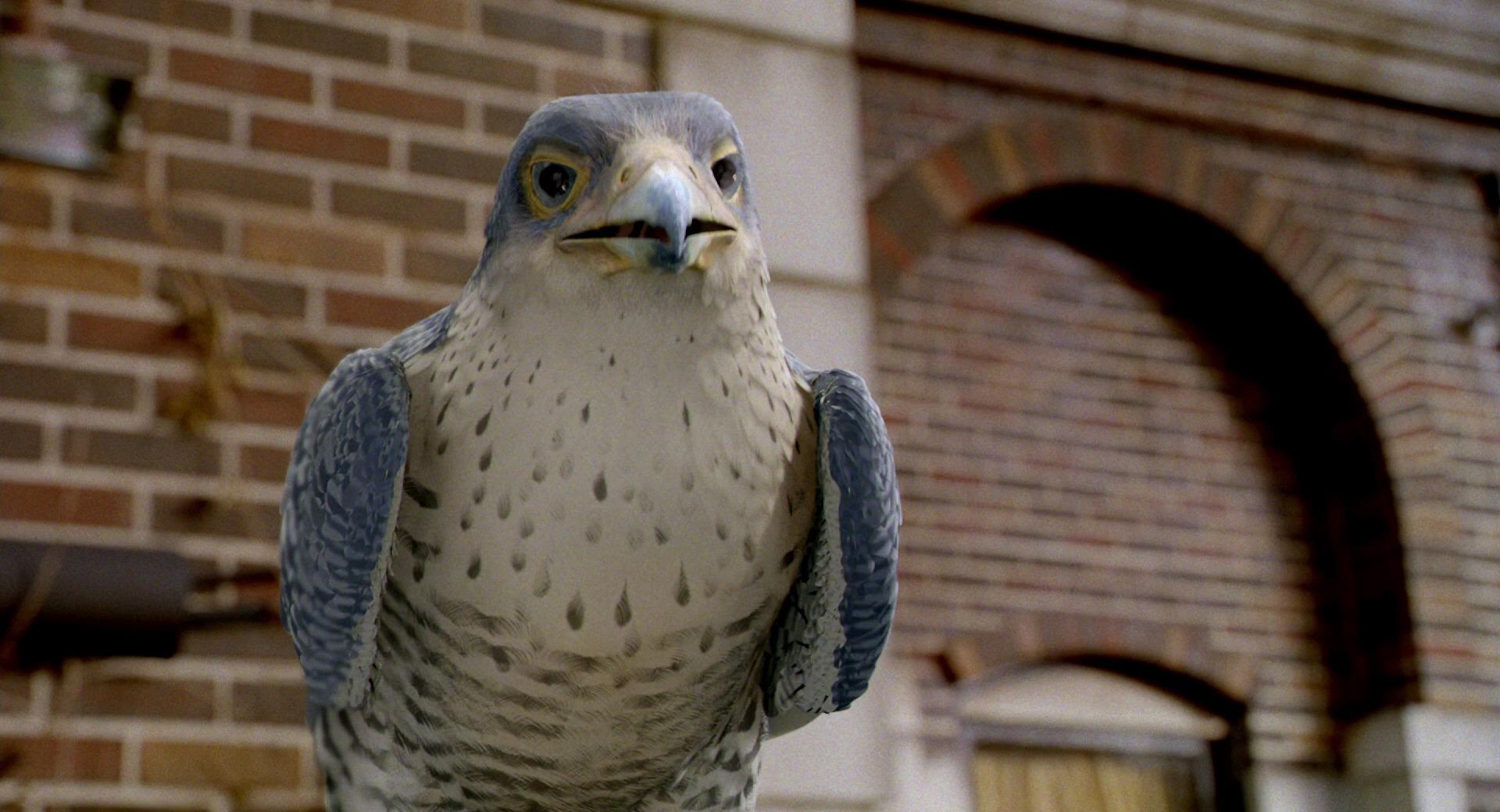 Duke Falcon
