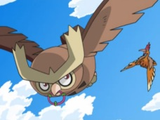 Yue's Noctowl