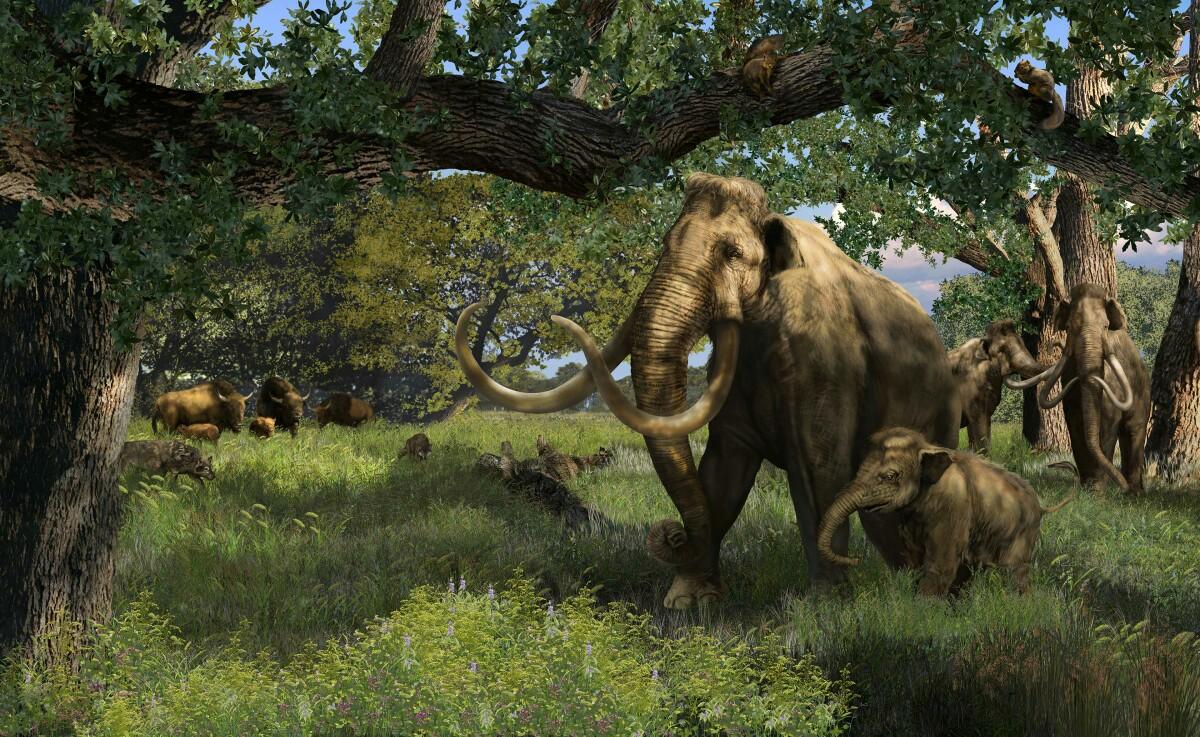 American Northern Mammoth