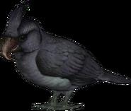 American broad-billed parrot (SciiFii)