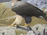 Woodward's eagle (SciiFii)