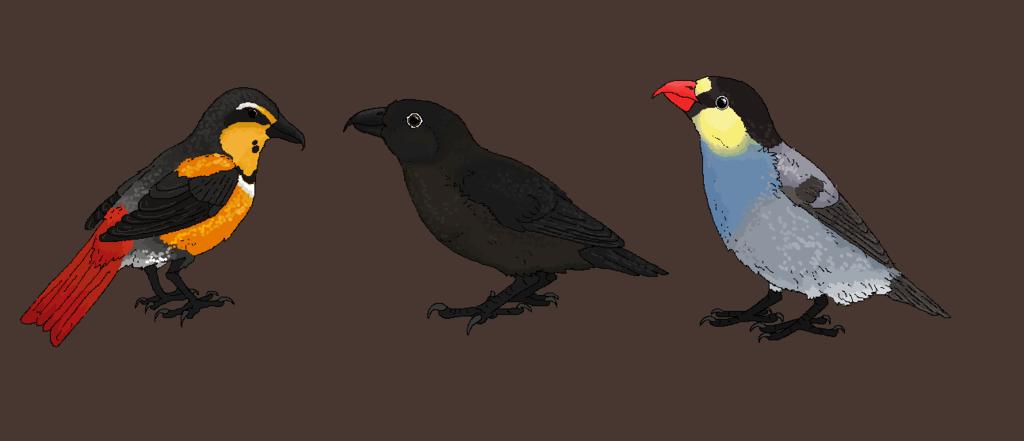 American Vampire Finches