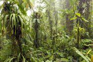 California Rainforest 14
