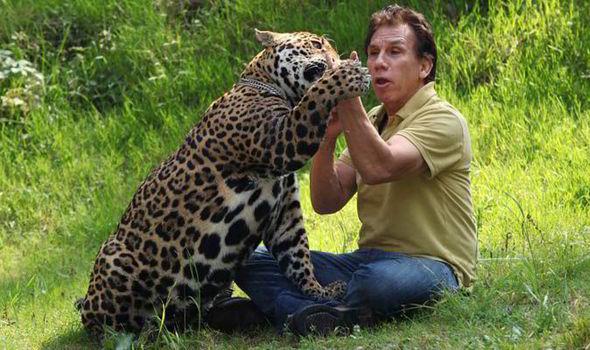 Domestic Jaguar