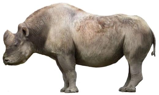 Elasmotherium (SciiFii)