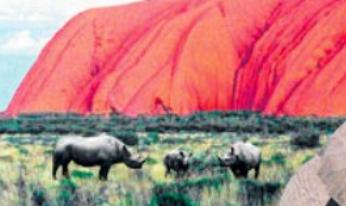 Australian Rhinoceros