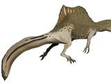 Spinosaurus V2 (SciiFii)