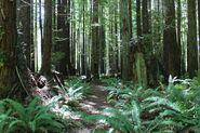 California Rainforest 4