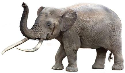 Cyprus dwarf elephant (SciiFii)