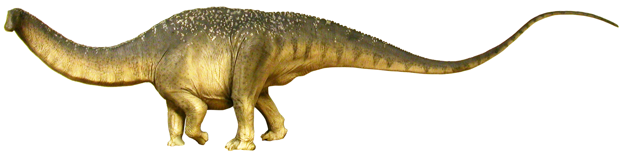 Apatosaurus (SciiFii)
