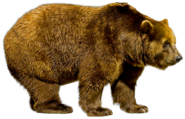 New England brown bear (SciiFii)
