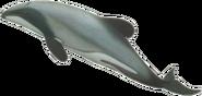 Oceanside dolphin (SciiFii)