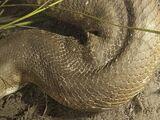 Anaconda 5