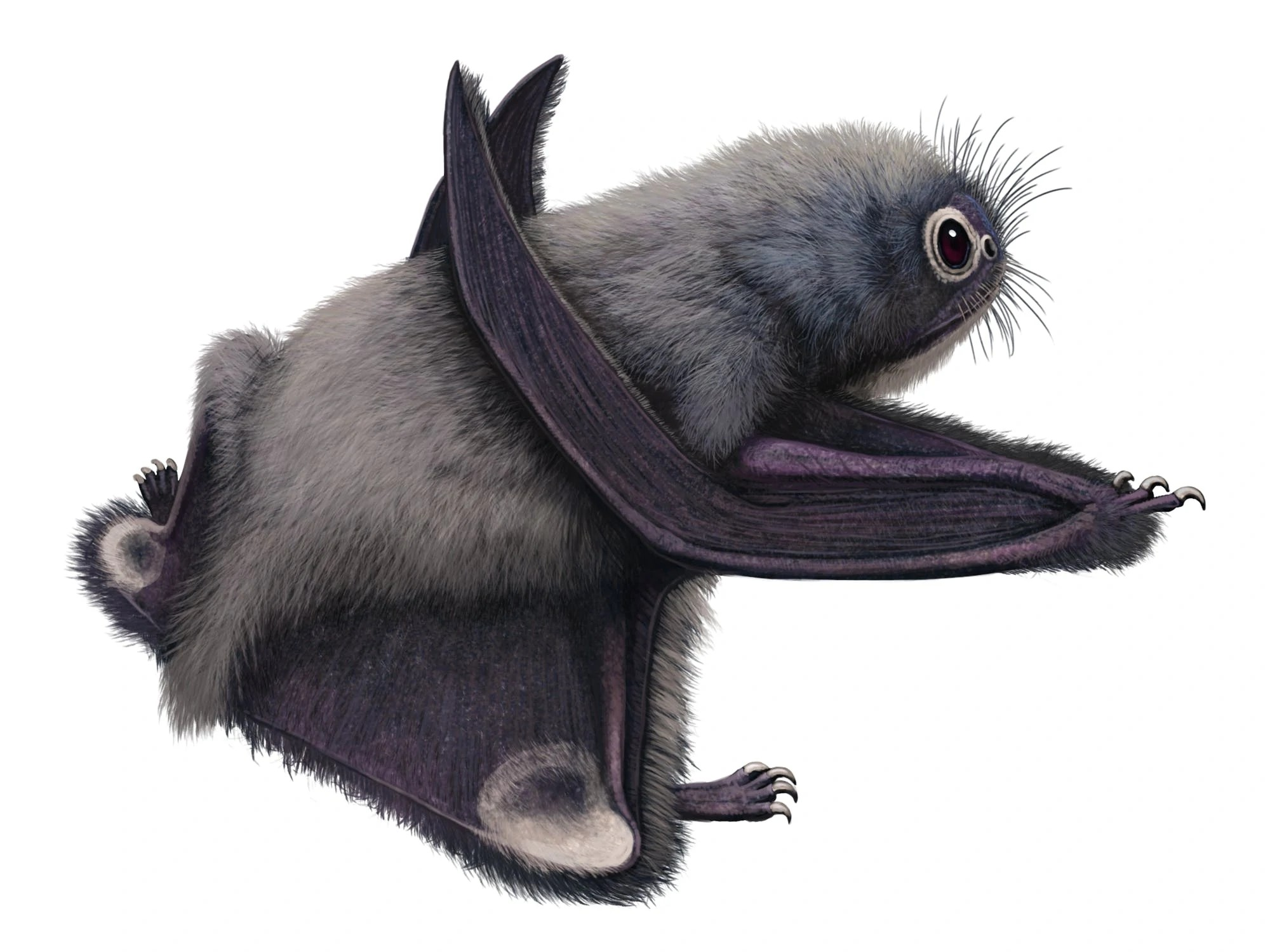 Anurognathus (SciiFii)