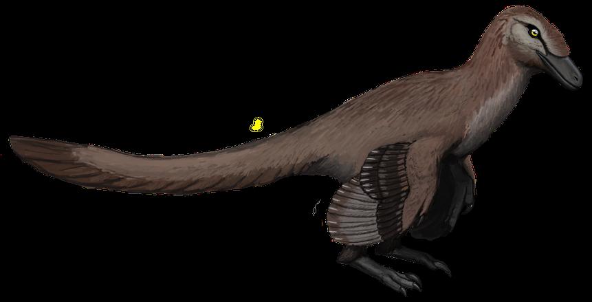 Acheroraptor (SciiFii)