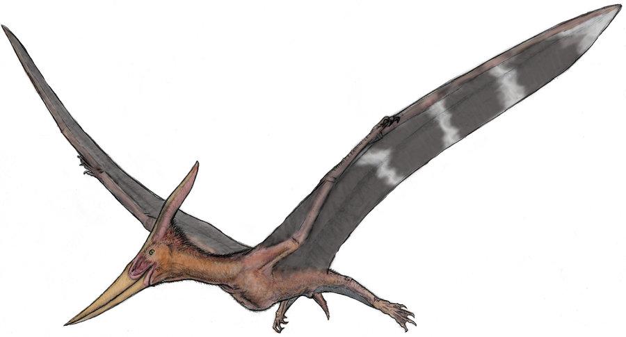 Pteranodon Argentinus