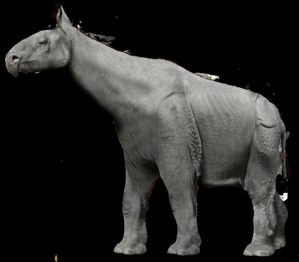 Paraceratherium (SciiFii)