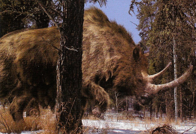 North American Rhinoceros