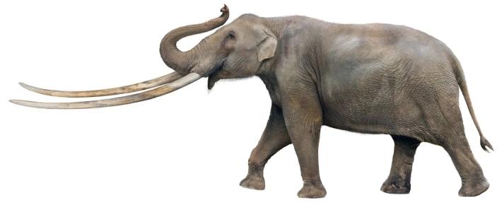Zygolophodon (SciiFii)