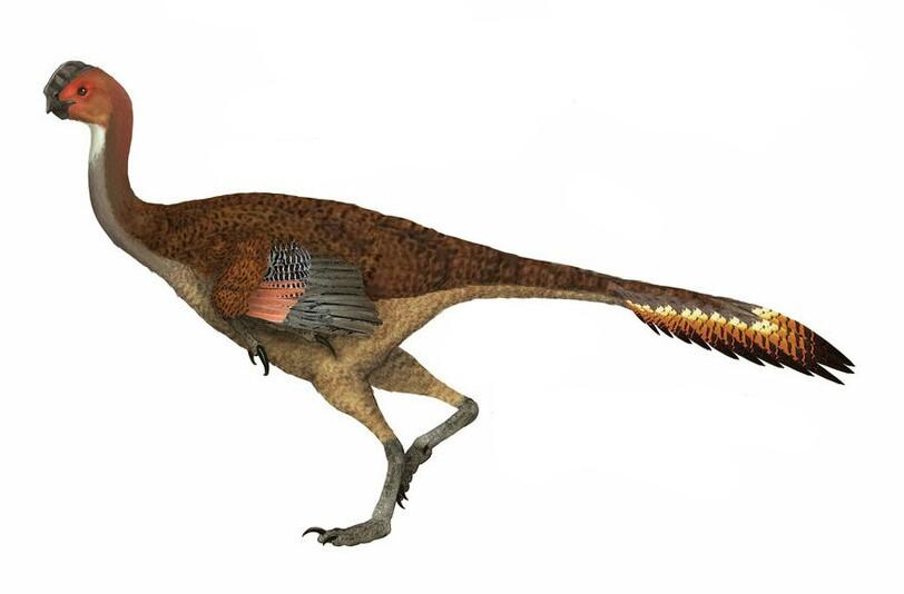 Saltaraptor