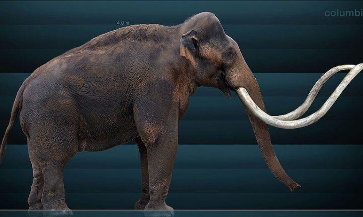 Domestic Mammoth