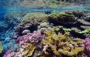 Californian Great Barrier Reef (SciiFii) 2