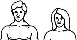 Human-genders.png
