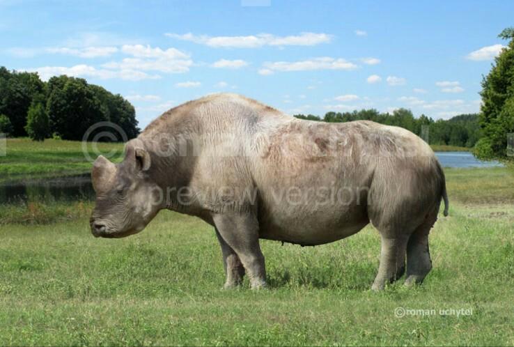 Giant-Horned Rhinoceros