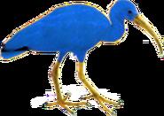 Blue ibis (SciiFii)