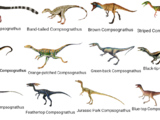 North American Compsognathus Disaster