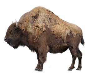 Ancient bison (SciiFii)
