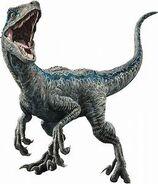 Blue the raptor