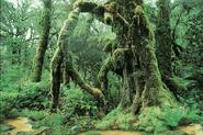 California Rainforest 11