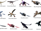 North American Microraptor Disaster