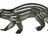 Marsupial Otter