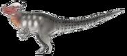 Pachycephalosaurus ovis