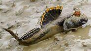 North American mudskipper (SciiFii)