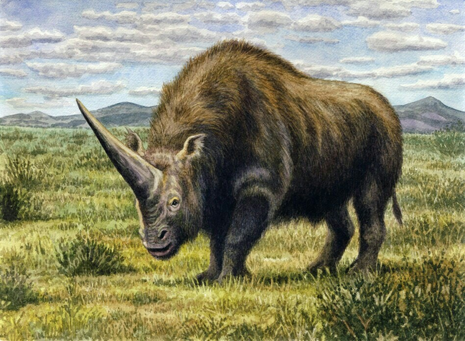 Darwin's Giant Rhinoceros
