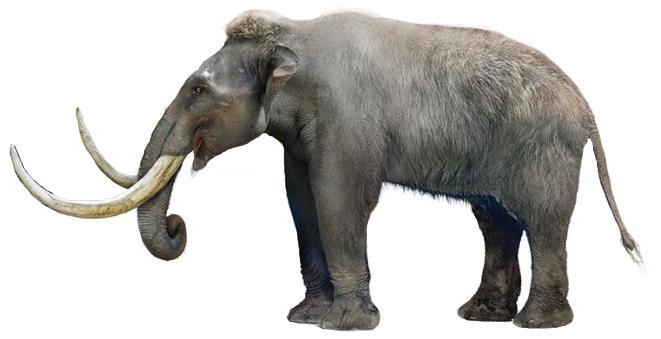 Pygmy mammoth (SciiFii)